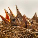 Nisthilfen für Brutvögel im Garten